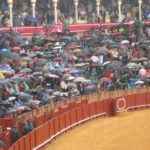 Bullfighting: a writer's dilemma – the the country scoop