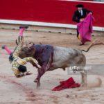 Bullfights — san fermin festival 2017