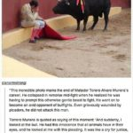 Ending bullfighting in the country is harder than simply mentioning cruelty and suffering