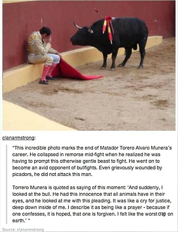 Ending bullfighting in the country is harder than simply mentioning cruelty and suffering country is becoming as indelibly