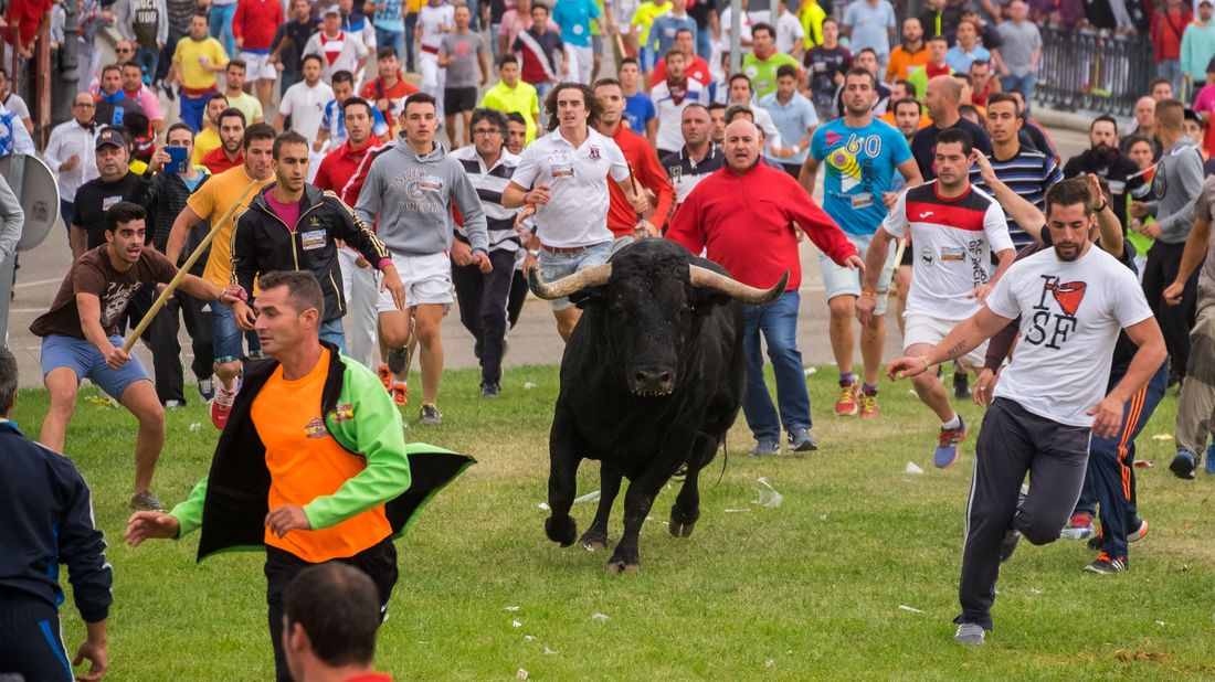 Ending centuries of tradition, a bull survives a spanish festival : parallels : npr baby bull