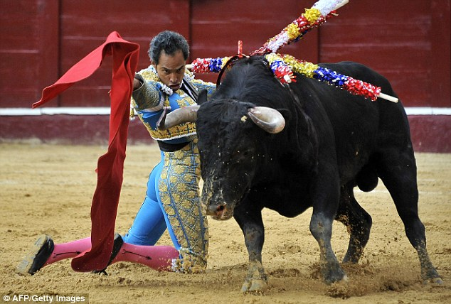 Exactly what do you put on to some bullfight? We do hope you enjoy