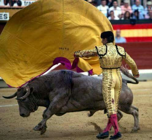 Junk described: what's bullfighting, why is still it around? - junkee minimum of until