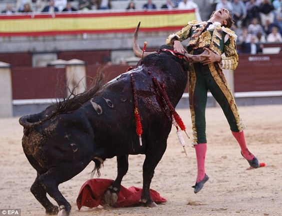 Junk described: what's bullfighting, why is still it around? - junkee supported, as