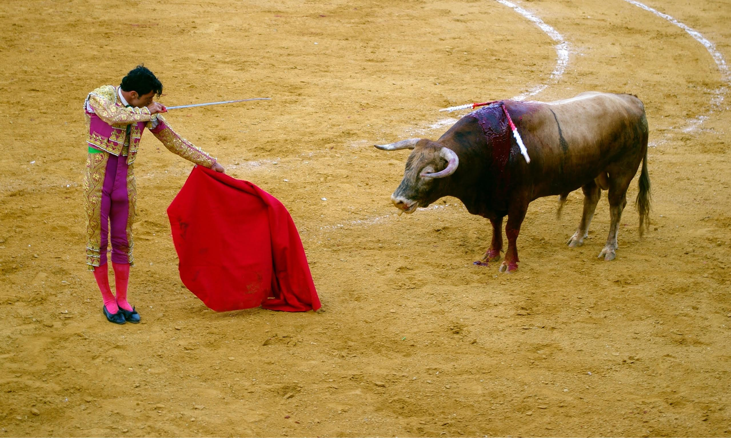 Junk described: what's bullfighting, why is still it around? - junkee Canary Islands