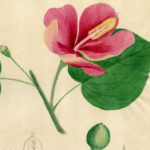 Rare trove of puerto rican plants and creatures illustrations present in the country – repeating islands