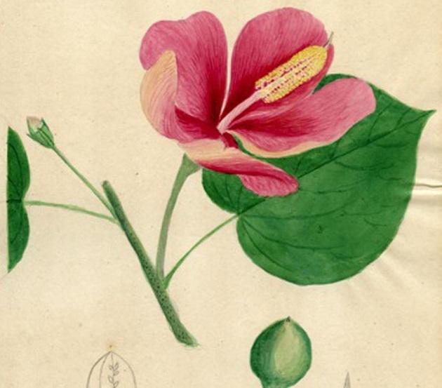 flora-slide02