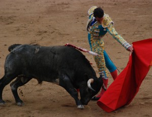 A matador seen with the bull in the final sequence of the bullfight. Taken in Madrid Spain.