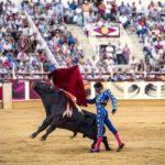 Thousands in spain's madrid demand bullfighting ban