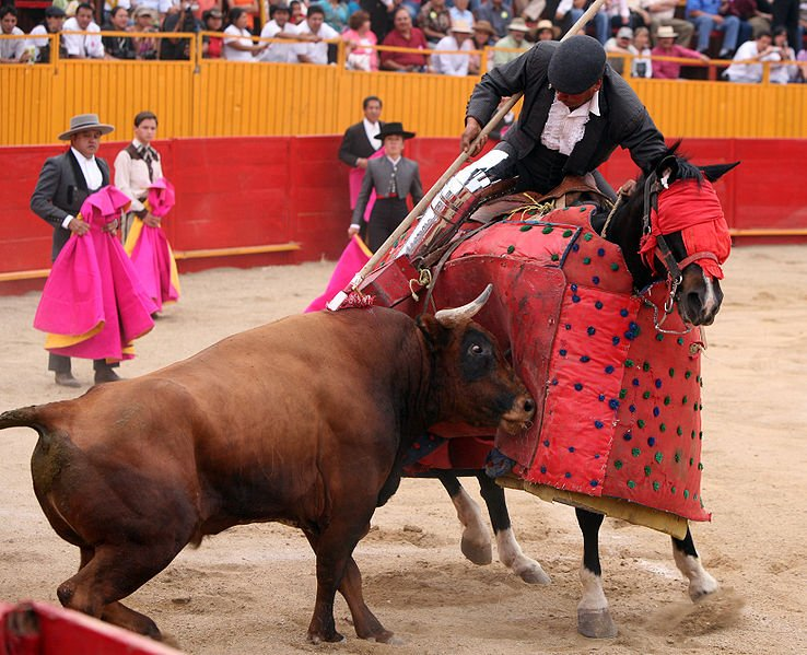 What really transpires with fighting bulls following the fight? add whatcounts to retrieve emailrnttfunction